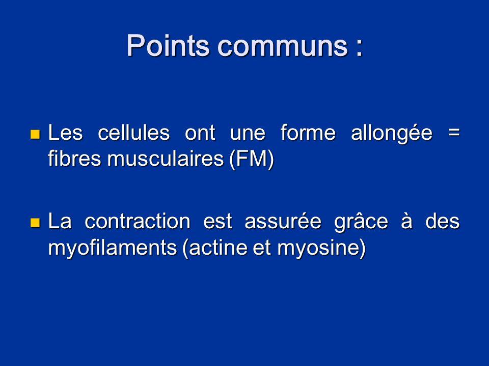 Points communs :  Les cellules ont une forme allongée = fibres musculaires (FM)  La contraction est assurée grâce à des myofilaments (actine et myos