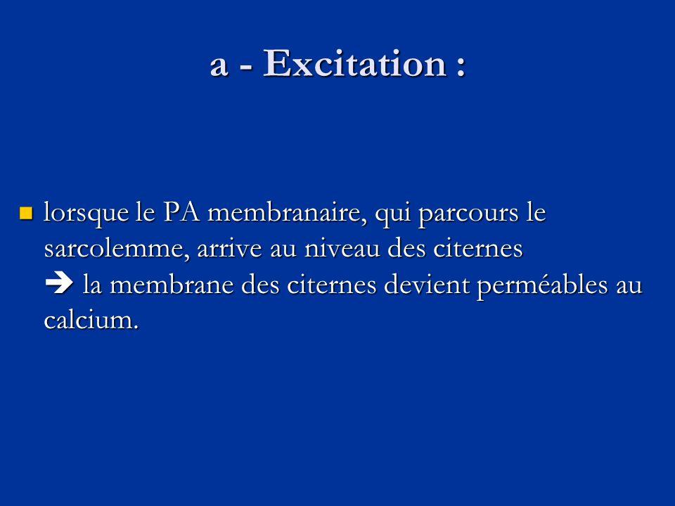 a - Excitation :  lorsque le PA membranaire, qui parcours le sarcolemme, arrive au niveau des citernes  la membrane des citernes devient perméables