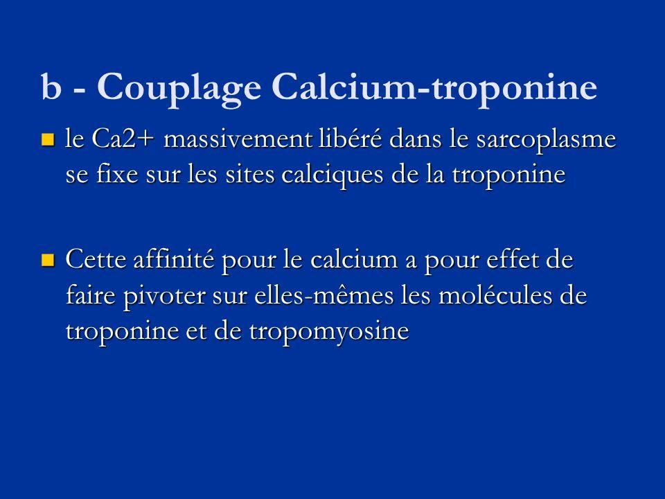 b - Couplage Calcium-troponine  le Ca2+ massivement libéré dans le sarcoplasme se fixe sur les sites calciques de la troponine  Cette affinité pour