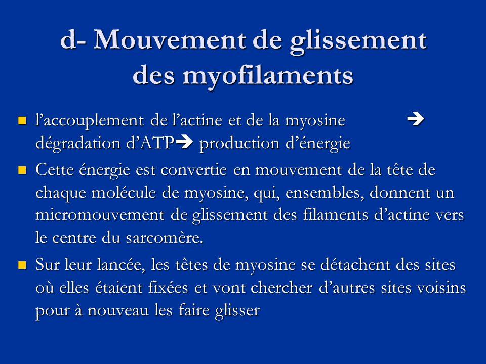 d- Mouvement de glissement des myofilaments  l'accouplement de l'actine et de la myosine  dégradation d'ATP  production d'énergie  Cette énergie e