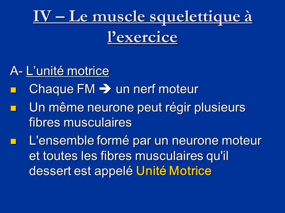 IV – Le muscle squelettique à l'exercice A- L'unité motrice  Chaque FM  un nerf moteur  Un même neurone peut régir plusieurs fibres musculaires  L