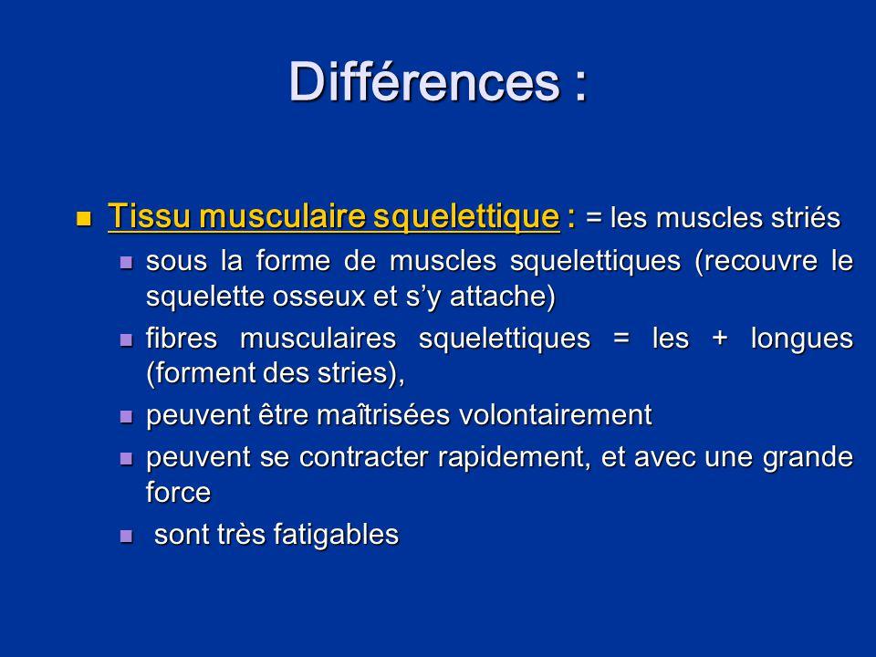 Différences :  Le tissu musculaire cardiaque :  n'existe que dans le cœur (myocarde)  strié,  contraction involontaire  Le tissu musculaire lisse :  dans les organes viscéraux creux  non striés,  involontaires
