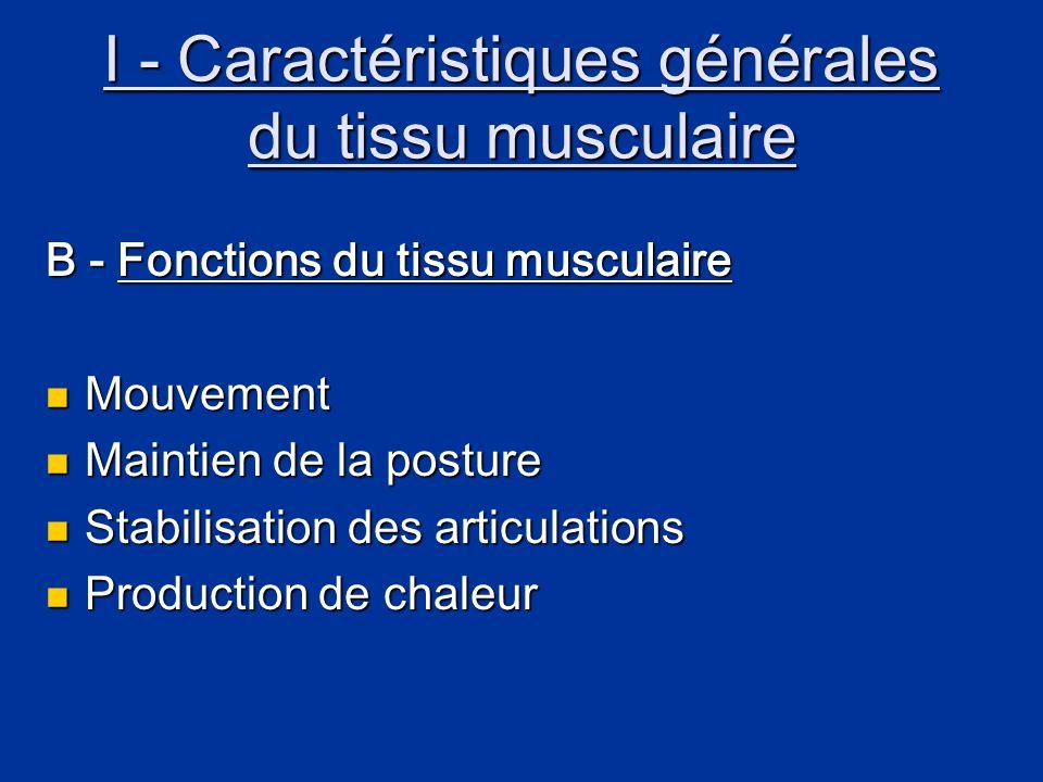 I - Caractéristiques générales du tissu musculaire C - Caractéristiques fonctionnelles des muscles  Excitabilité : faculté de percevoir un stimulus et d'y répondre  Contractilité : capacité de se contracter avec force en présence d'une stimulation appropriée