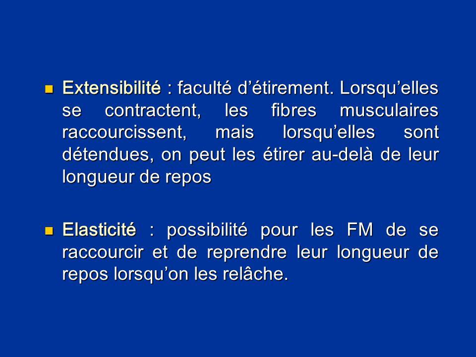  Extensibilité : faculté d'étirement. Lorsqu'elles se contractent, les fibres musculaires raccourcissent, mais lorsqu'elles sont détendues, on peut l
