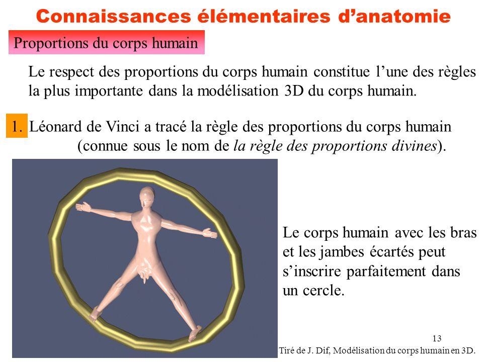 13 Connaissances élémentaires d'anatomie Proportions du corps humain Le respect des proportions du corps humain constitue l'une des règles la plus imp