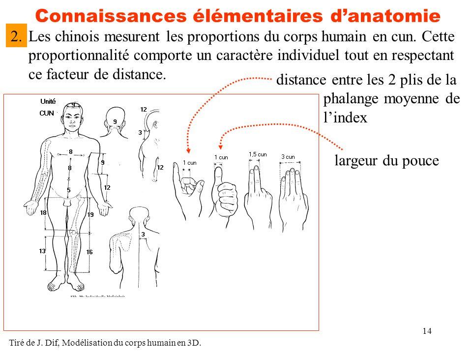 14 Connaissances élémentaires d'anatomie Les chinois mesurent les proportions du corps humain en cun. Cette proportionnalité comporte un caractère ind