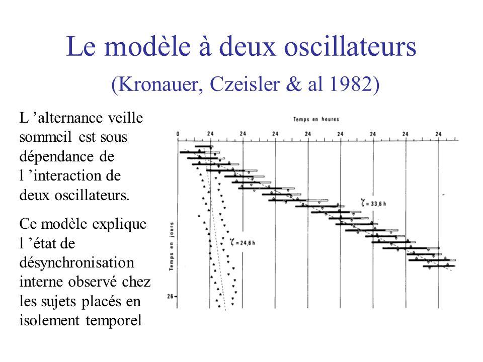 Le modèle à deux oscillateurs (Kronauer, Czeisler & al 1982) L 'alternance veille sommeil est sous dépendance de l 'interaction de deux oscillateurs.
