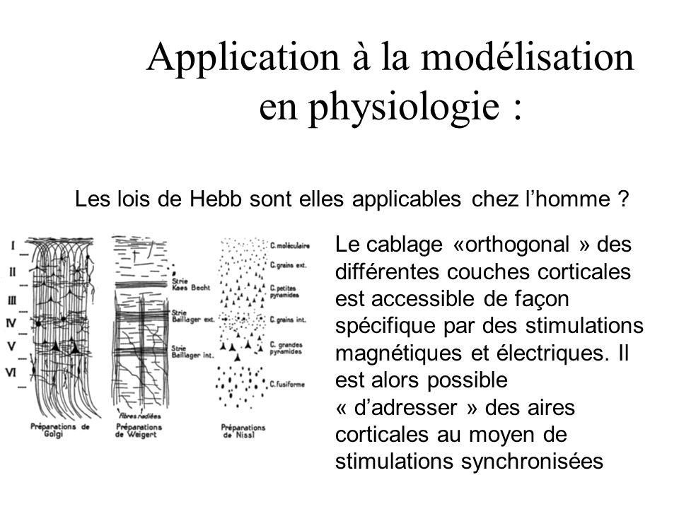 Application à la modélisation en physiologie : Les lois de Hebb sont elles applicables chez l'homme ? Le cablage «orthogonal » des différentes couches