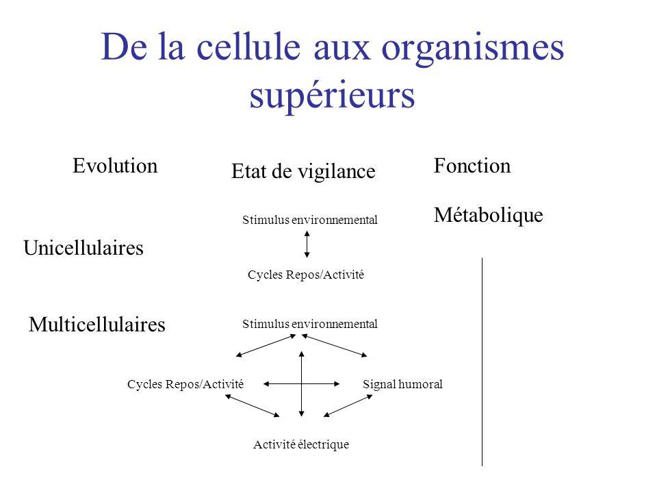 De la cellule aux organismes supérieurs Evolution Etat de vigilance Fonction Métabolique Unicellulaires Stimulus environnemental Cycles Repos/Activité