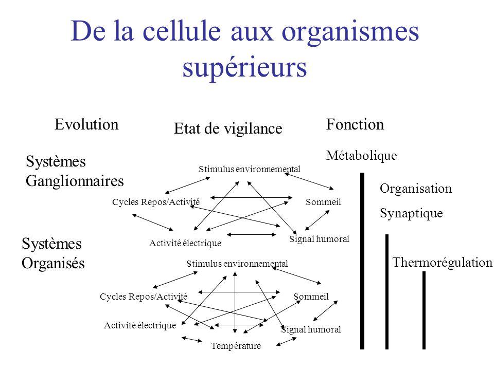 De la cellule aux organismes supérieurs Evolution Etat de vigilance Fonction Métabolique Systèmes Ganglionnaires Systèmes Organisés Stimulus environne