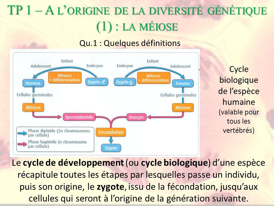 Le cycle de développement (ou cycle biologique) d'une espèce récapitule toutes les étapes par lesquelles passe un individu, puis son origine, le zygote, issu de la fécondation, jusqu'aux cellules qui seront à l'origine de la génération suivante.