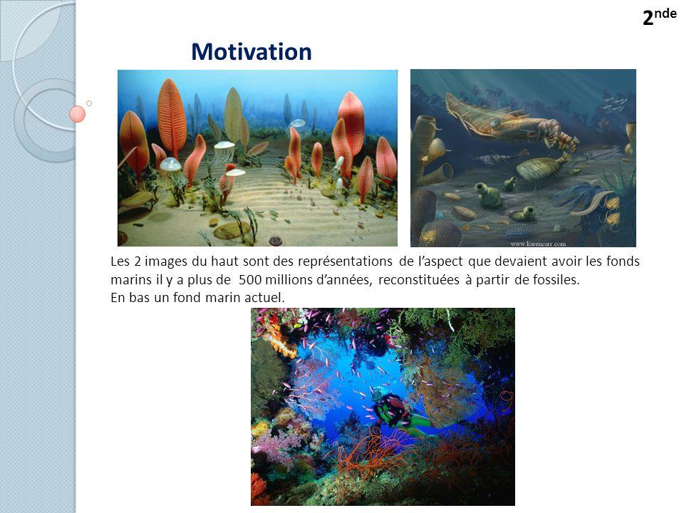 Motivation Les 2 images du haut sont des représentations de l'aspect que devaient avoir les fonds marins il y a plus de 500 millions d'années, reconstituées à partir de fossiles.