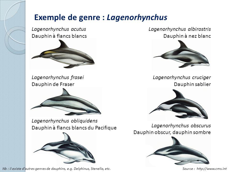 Exemple de genre : Lagenorhynchus Lagenorhynchus acutus Dauphin à flancs blancs Lagenorhynchus frasei Dauphin de Fraser Lagenorhynchus obliquidens Dau
