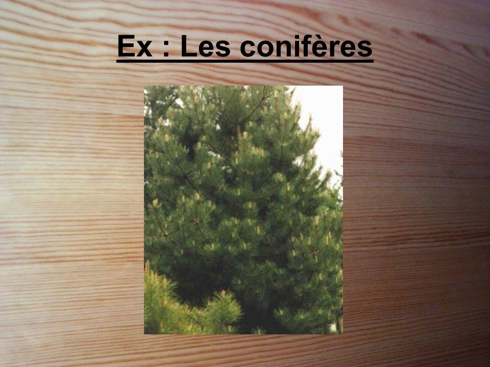 Identification •Les arbres les plus gros, les plus hauts et les plus vieux.