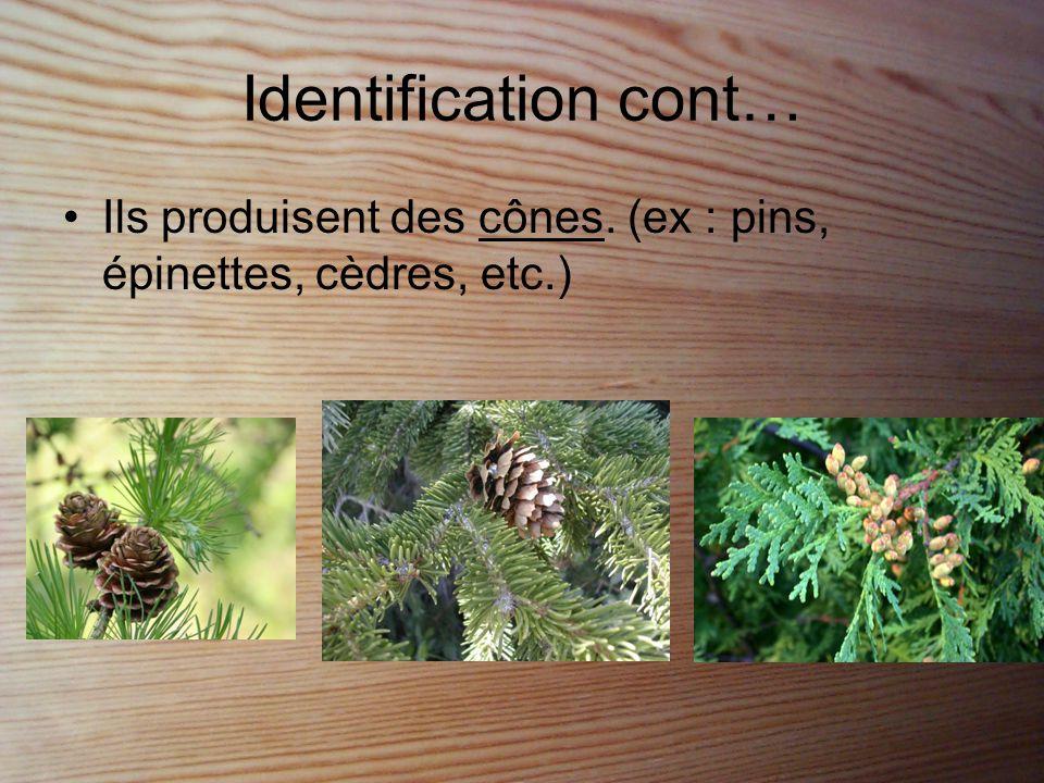 Identification cont… •Ils forment des graines.