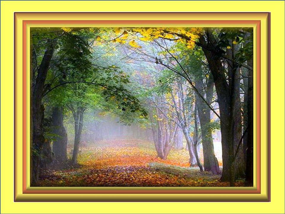 Je me souviens de tous ces arbres alignés Garnissant les trottoirs craquelés; Je me promène dans la lueur argentée Où doucement faiblit l'éclat de l'été…