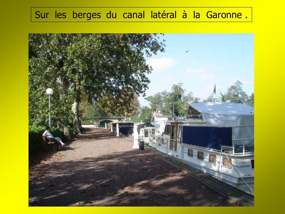 Sur les berges du canal latéral à la Garonne.