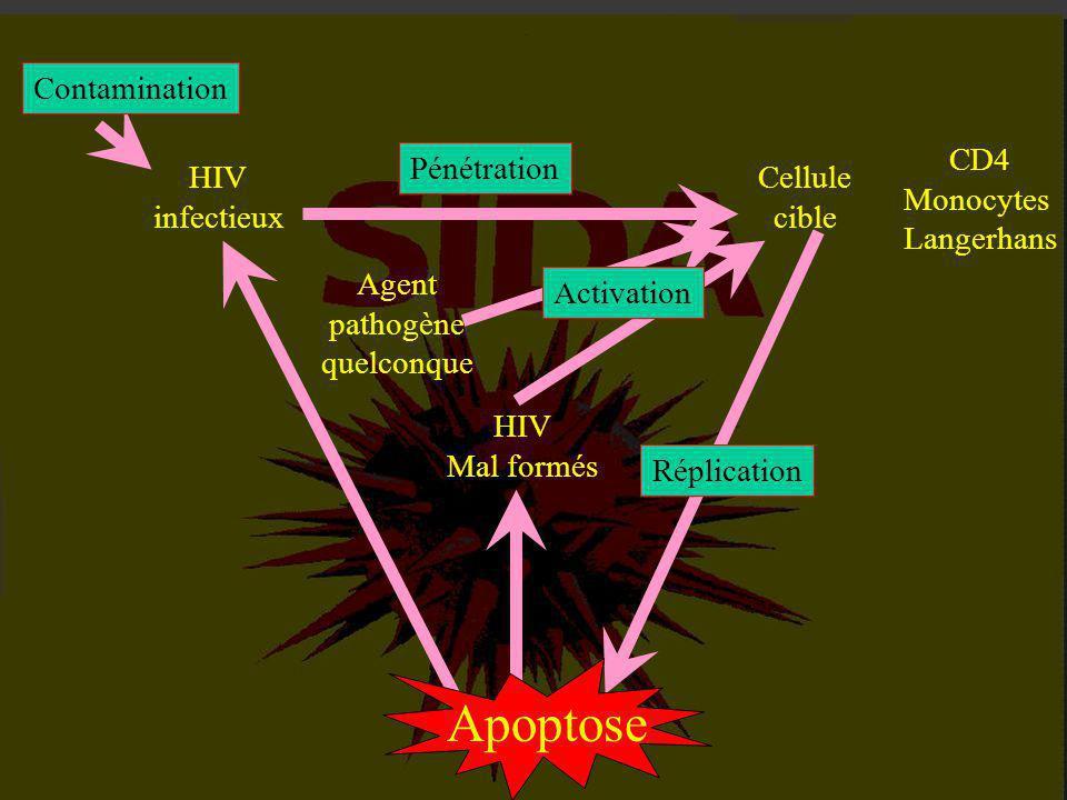 2-1 : La contamination passe inaperçue. 2-2 : Les symptômes du sida. 2-3 : Les lymphocytes CD4, cibles du V.I.H. II - L 'AVANCEE INEXORABLE DE L 'INFE