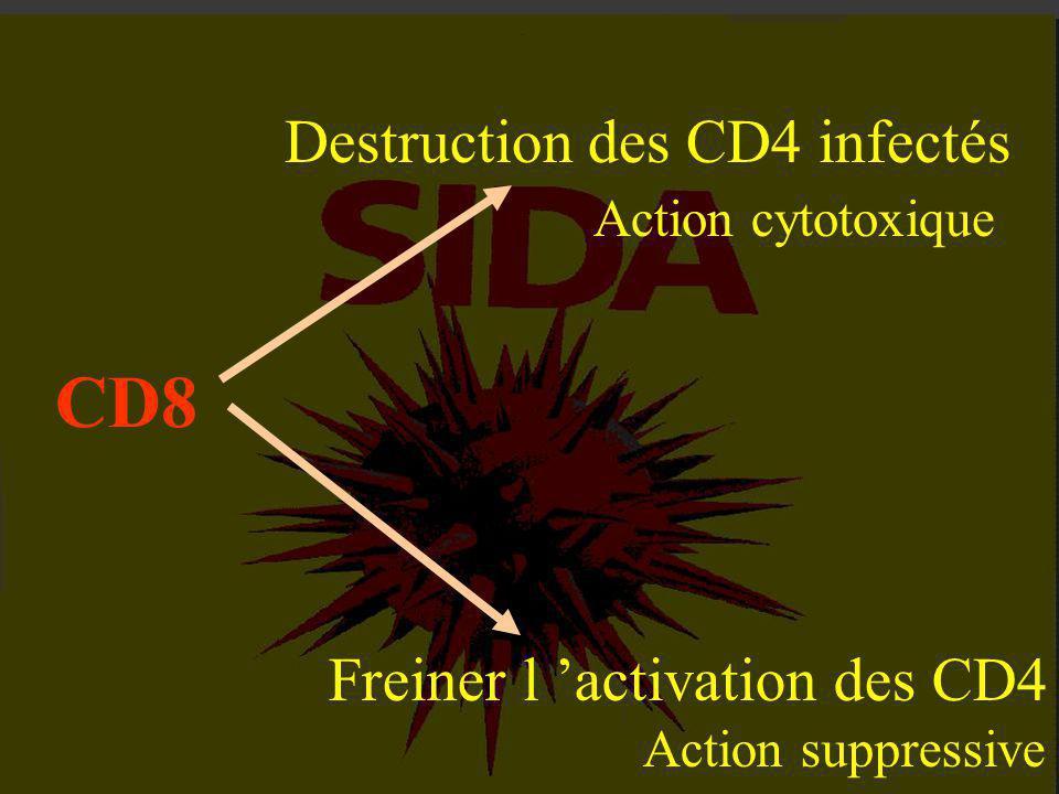 2-1 : La contamination passe inaperçue. 2-2 : Les symptômes du sida. 2-3 : Les lymphocytes CD4, cibles du V.I.H. 2-4 : Le mystère des CD8. II - L 'AVA