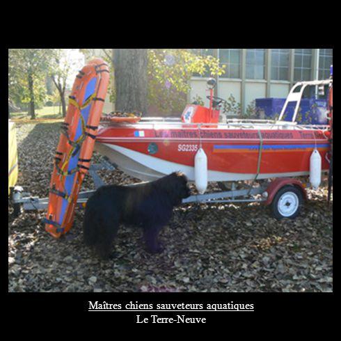 Maîtres chiens sauveteurs aquatiques Le Terre-Neuve