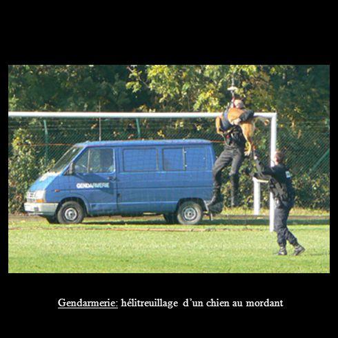 Gendarmerie: hélitreuillage d'un chien au mordant