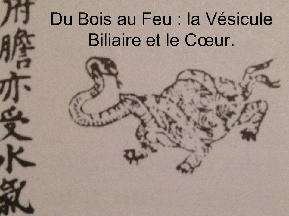 Du Bois au Feu : la Vésicule Biliaire et le Cœur.