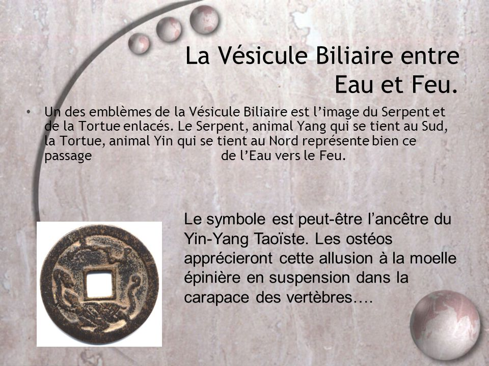 La Vésicule Biliaire entre Eau et Feu. • Un des emblèmes de la Vésicule Biliaire est l'image du Serpent et de la Tortue enlacés. Le Serpent, animal Ya