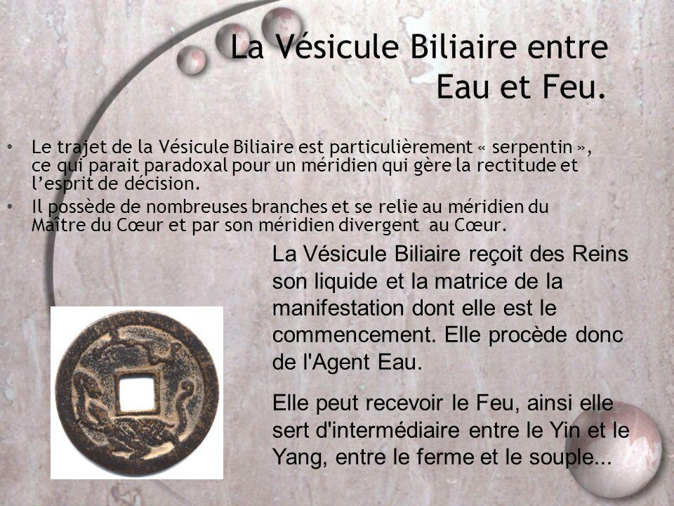 La Vésicule Biliaire entre Eau et Feu. • Le trajet de la Vésicule Biliaire est particulièrement « serpentin », ce qui parait paradoxal pour un méridie