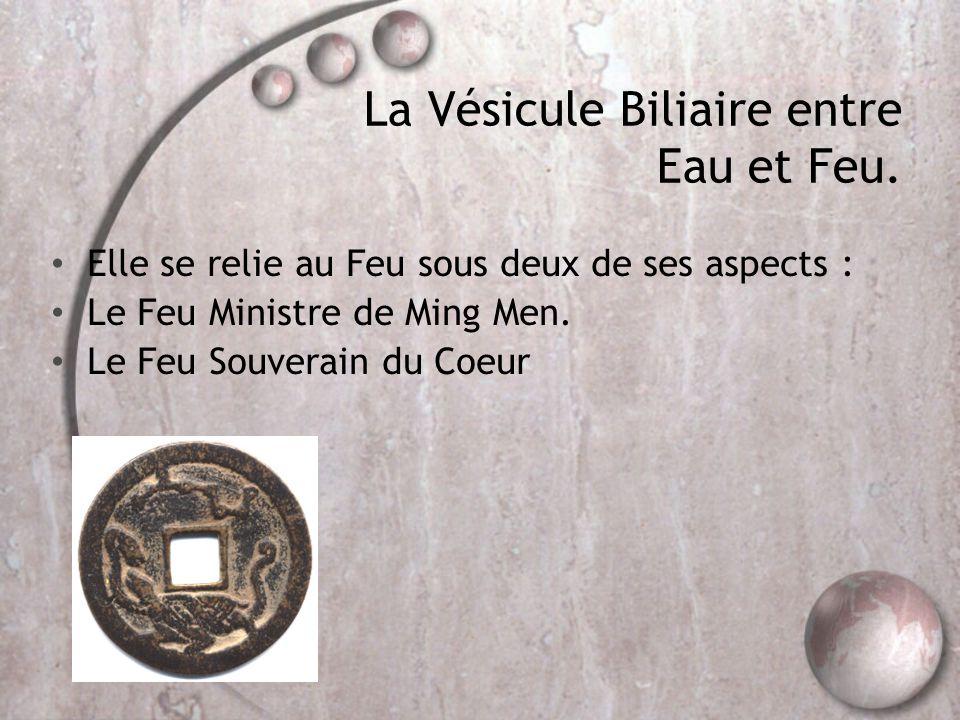 La Vésicule Biliaire entre Eau et Feu. • Elle se relie au Feu sous deux de ses aspects : • Le Feu Ministre de Ming Men. • Le Feu Souverain du Coeur