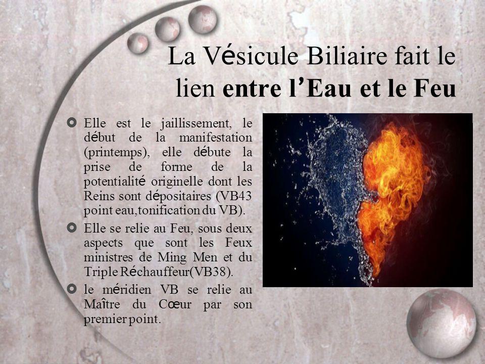 La V é sicule Biliaire fait le lien entre l ' Eau et le Feu  Elle est le jaillissement, le d é but de la manifestation (printemps), elle d é bute la