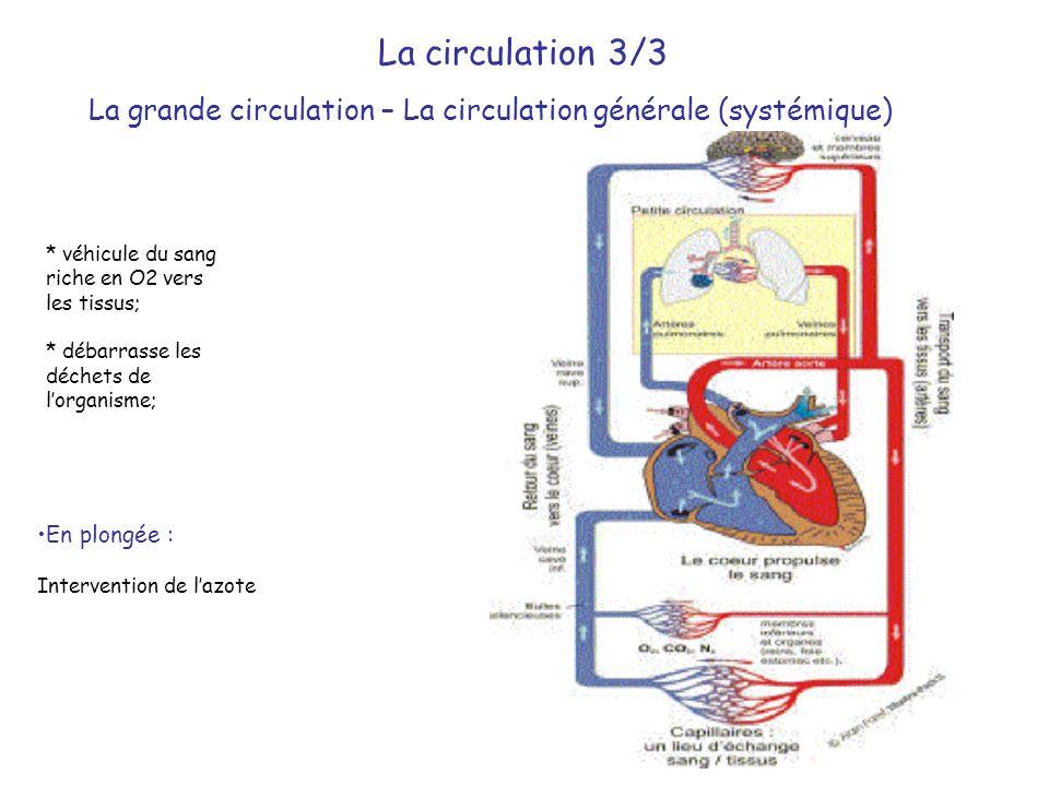 * véhicule du sang riche en O2 vers les tissus; * débarrasse les déchets de l'organisme; La circulation 3/3 La grande circulation – La circulation gén