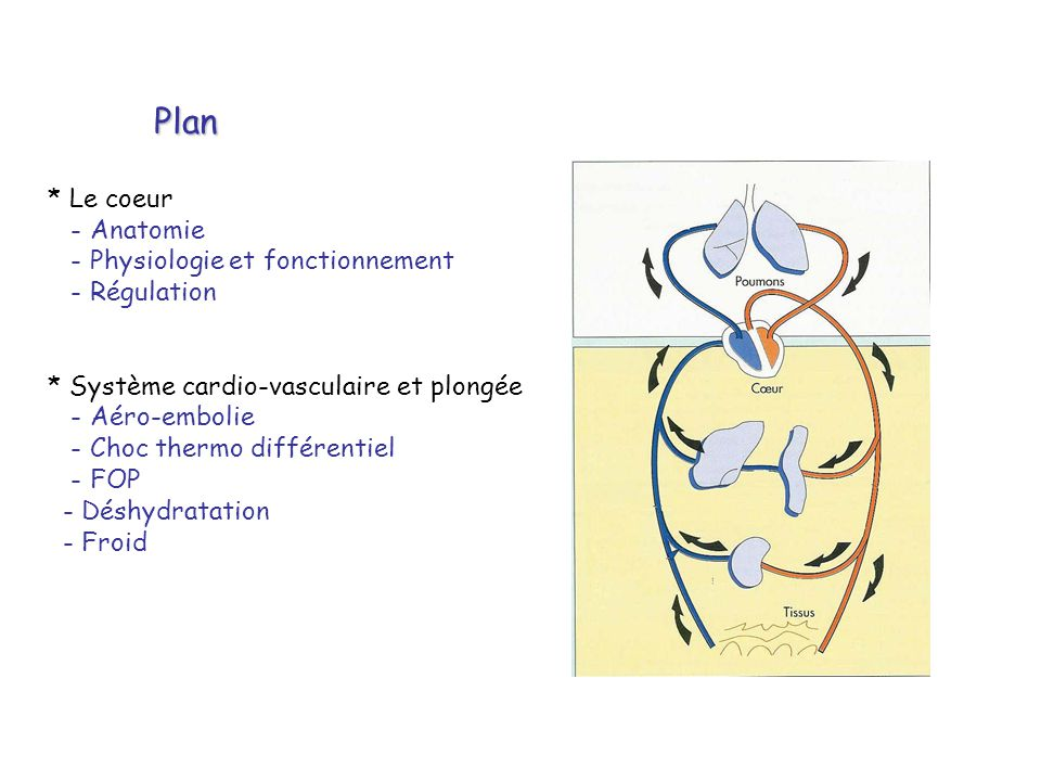 Plan * Le coeur - Anatomie - Physiologie et fonctionnement - Régulation * Système cardio-vasculaire et plongée - Aéro-embolie - Choc thermo différenti