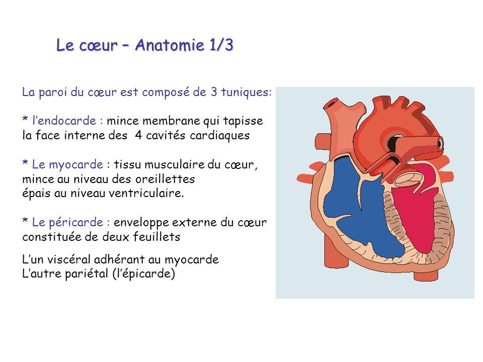 Le cœur – Anatomie 1/3 La paroi du cœur est composé de 3 tuniques: * l'endocarde : mince membrane qui tapisse la face interne des 4 cavités cardiaques