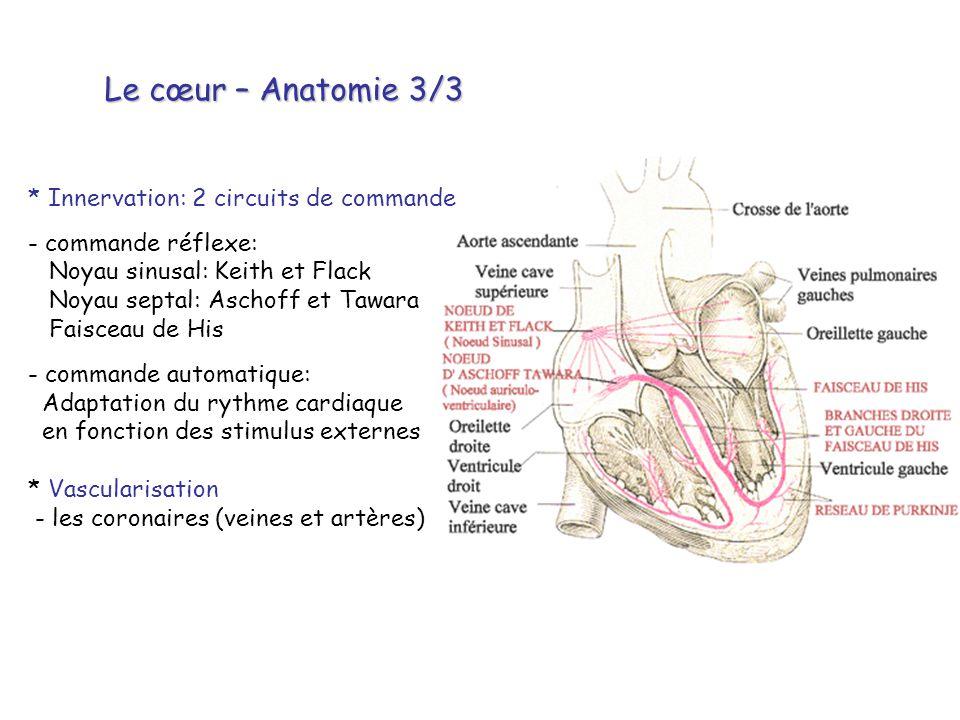Le cœur – Anatomie 3/3 * Innervation: 2 circuits de commande - commande réflexe: Noyau sinusal: Keith et Flack Noyau septal: Aschoff et Tawara Faiscea