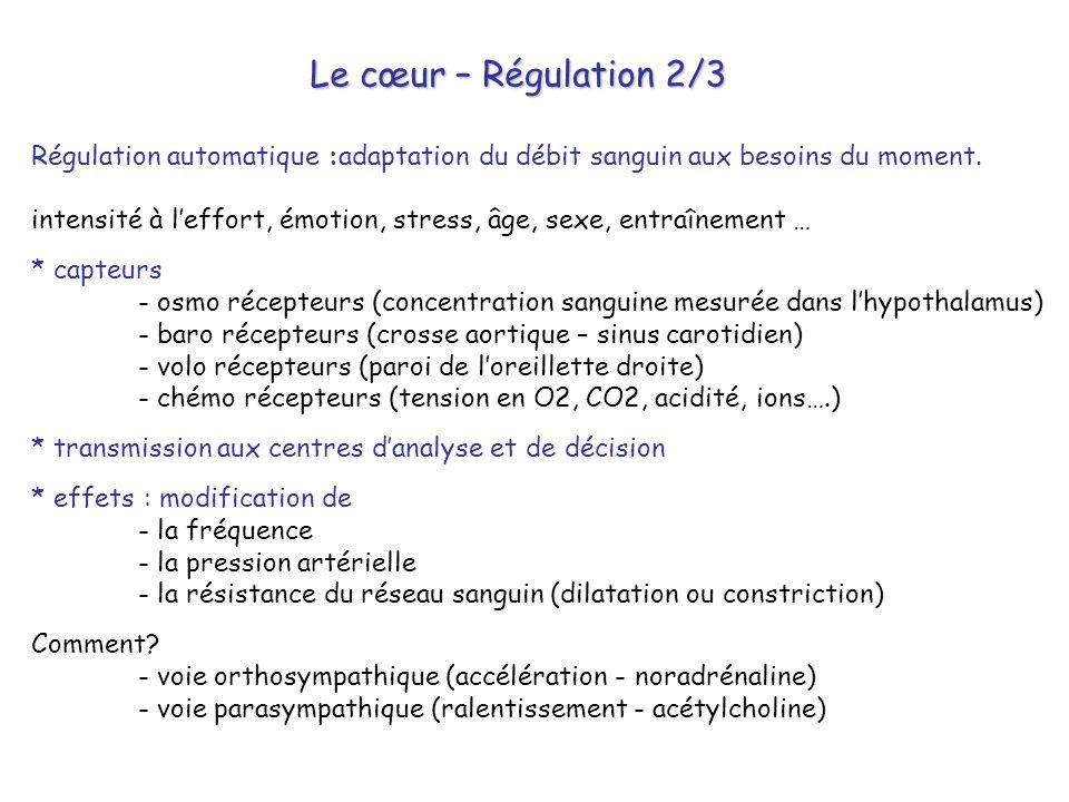Le cœur – Régulation 2/3 Régulation automatique :adaptation du débit sanguin aux besoins du moment. intensité à l'effort, émotion, stress, âge, sexe,