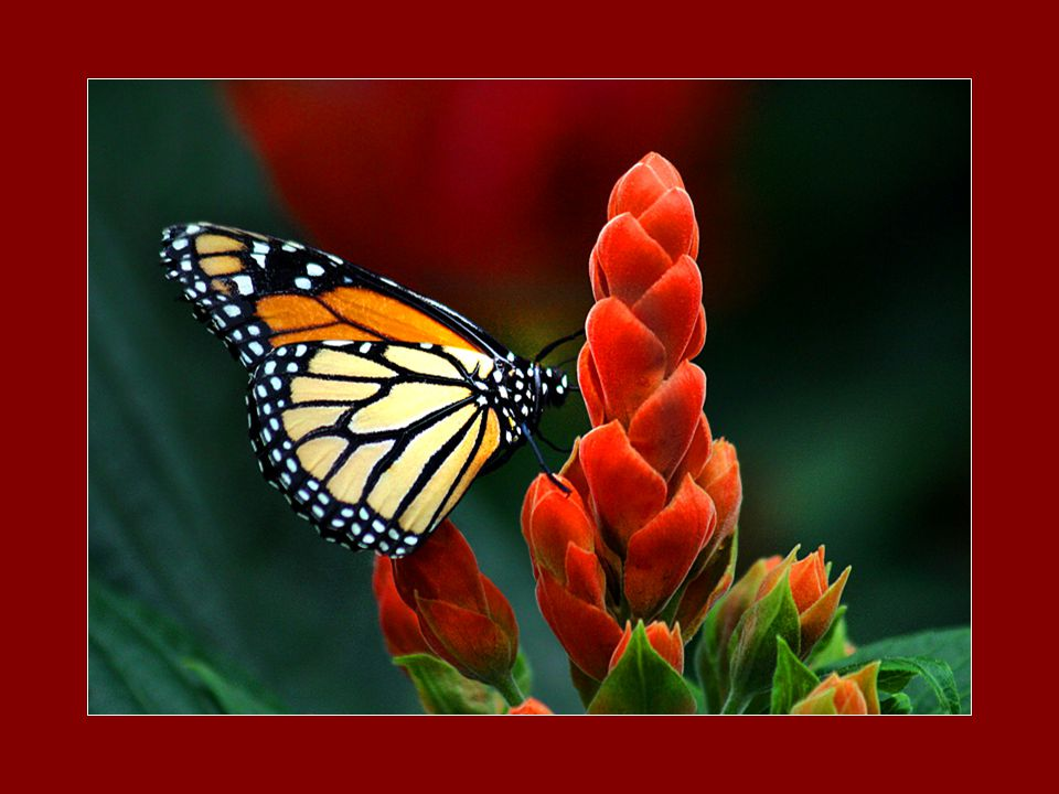Tout est possible À celui qui utilise ses vieilles Expériences pour grandir Et évoluer Tout est possible si l'on a de la Compassion pour soi Tout est