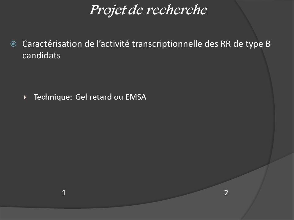  Caractérisation de l'activité transcriptionnelle des RR de type B candidats Technique: Gel retard ou EMSA Projet de recherche 21