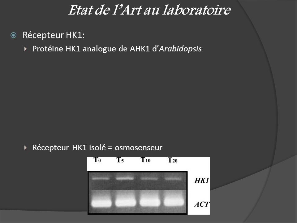 Etat de l'Art au laboratoire  Récepteur HK1: Protéine HK1 analogue de AHK1 d'Arabidopsis Récepteur HK1 isolé = osmosenseur