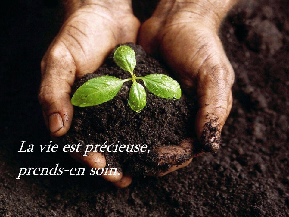 Texte de Mère Teresa Musique : Enya – A day without rain
