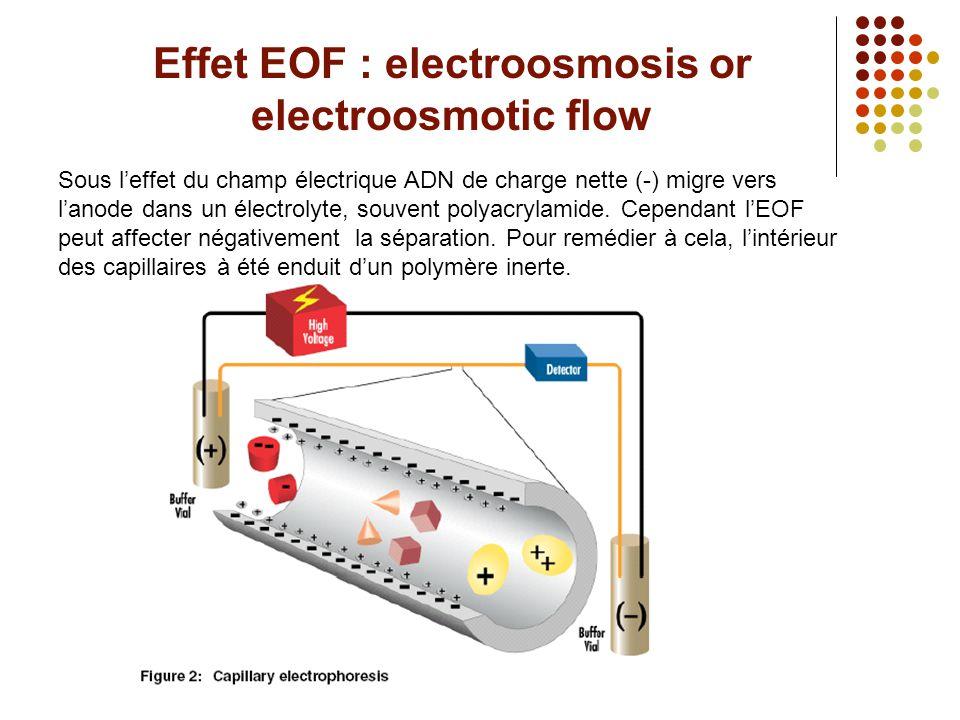 Effet EOF : electroosmosis or electroosmotic flow Sous l'effet du champ électrique ADN de charge nette (-) migre vers l'anode dans un électrolyte, sou