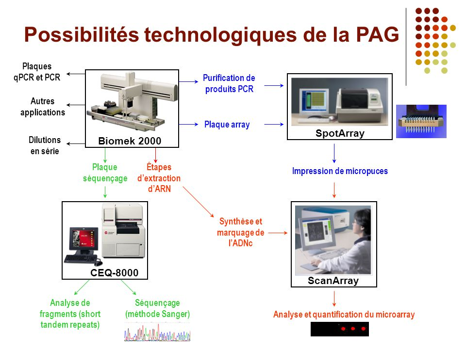 Le microarray à la PAG c'est… Dans l'immédiat : • Microarray d'ADN Innovations dans la communauté scientifique • Lipidomic array (Dr Robinson à Stanford) • Cell array (Dr Sabatini à Boston) Et bientôt des array dynamiques… • «Run on» array (transcription) (UHN) • Ribosome capture array (traduction) (UHN) À moyen terme : • CpG island (UHN) •ChIP-on-chip (interaction ADN-protéine) (Agilent) • Protein array