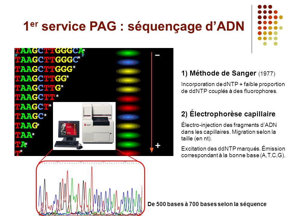 1 er service PAG : séquençage d'ADN 1) Méthode de Sanger (1977) Incorporation de dNTP + faible proportion de ddNTP couplés à des fluorophores. 2) Élec