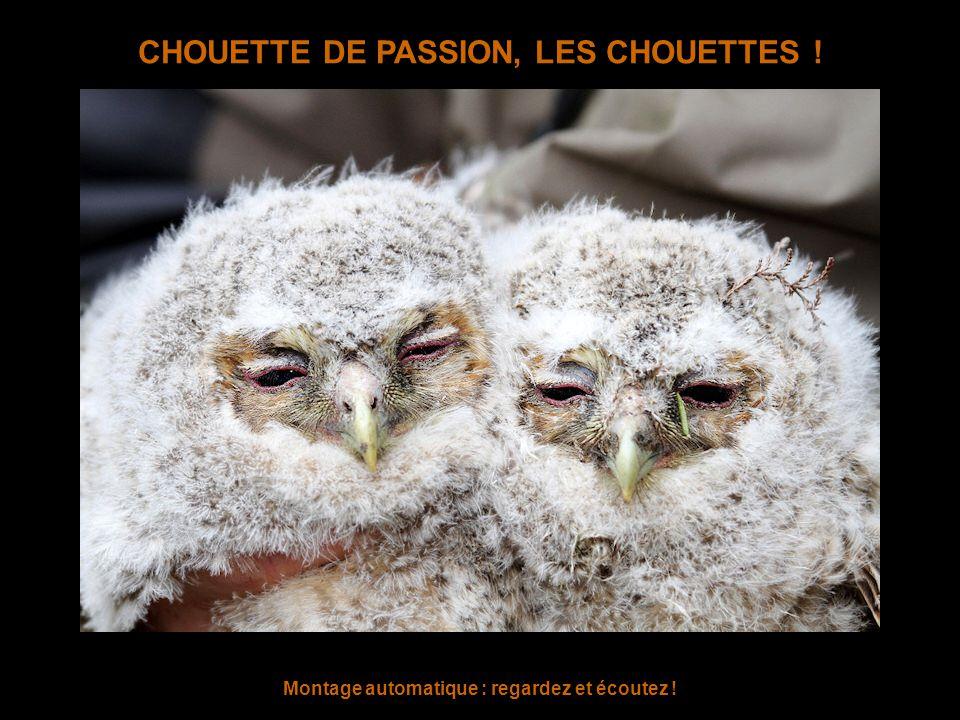 CHOUETTE DE PASSION, LES CHOUETTES ! Montage automatique : regardez et écoutez !