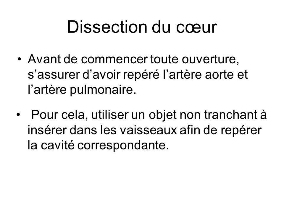 Dissection du cœur •A•Avant de commencer toute ouverture, s'assurer d'avoir repéré l'artère aorte et l'artère pulmonaire. • Pour cela, utiliser un obj