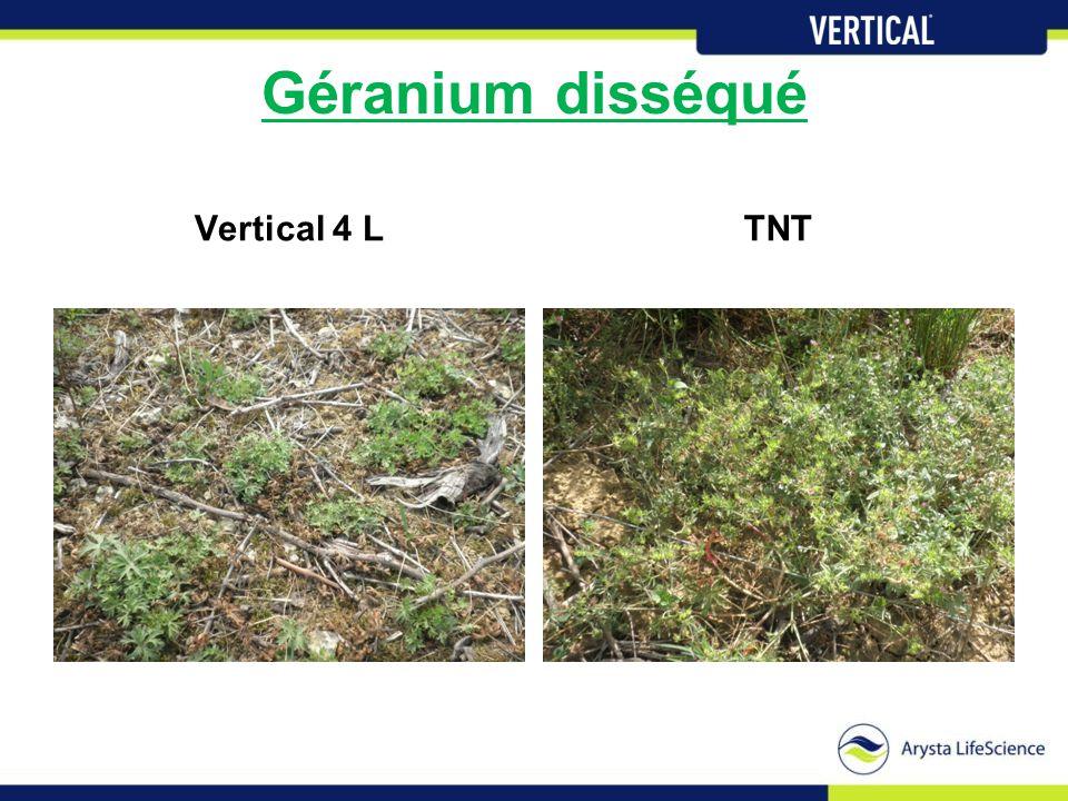 Géranium disséqué Vertical 4 LTNT