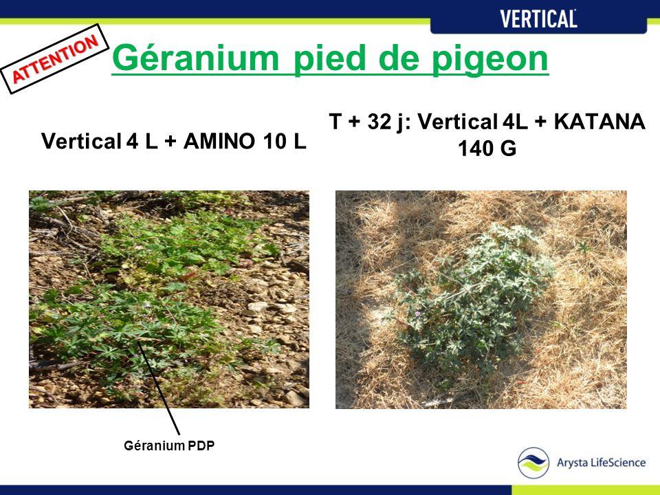 Géranium pied de pigeon Vertical 4 L + AMINO 10 L T + 32 j: Vertical 4L + KATANA 140 G ATTENTION Géranium PDP