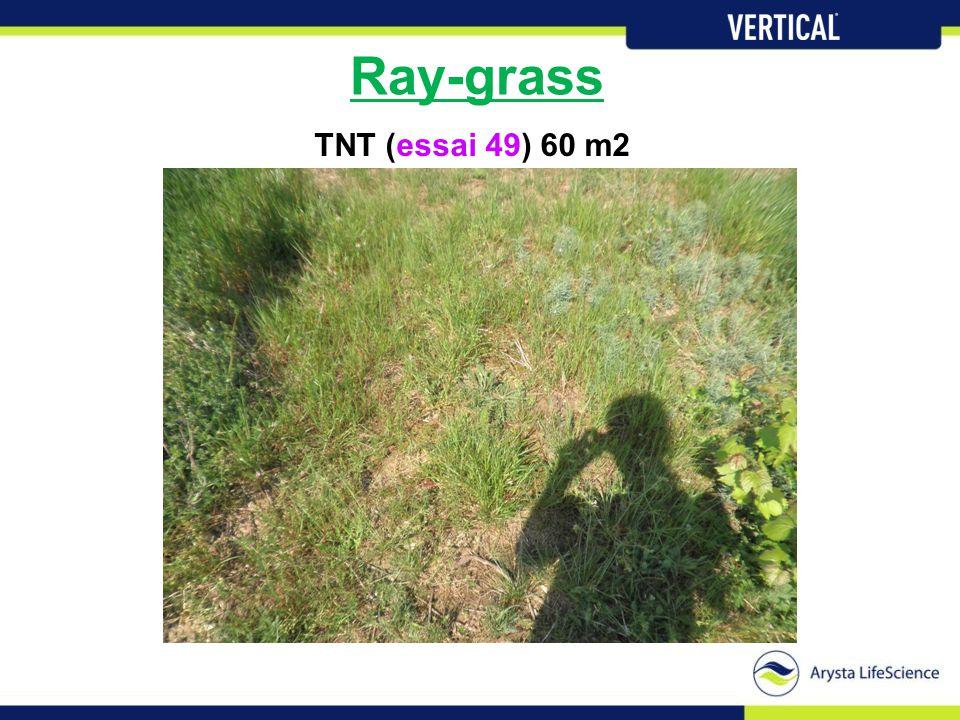 Ray-grass TNT (essai 49) 60 m2