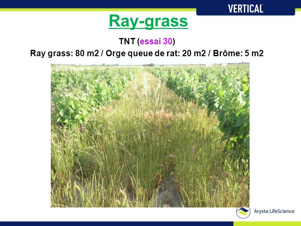 Ray-grass TNT (essai 30) Ray grass: 80 m2 / Orge queue de rat: 20 m2 / Brôme: 5 m2