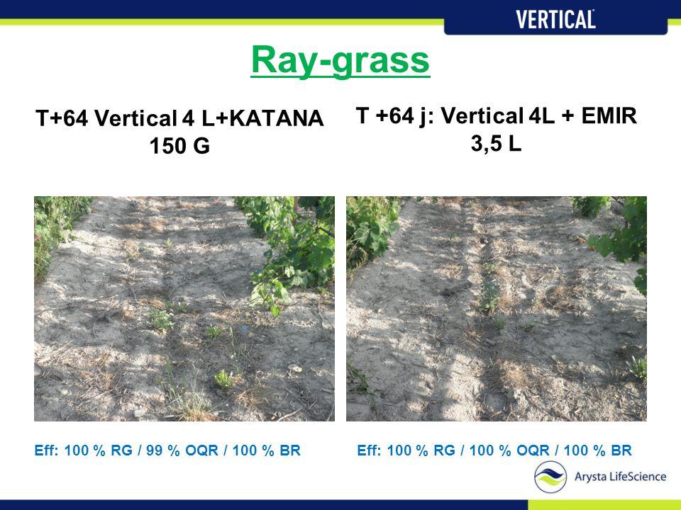 Ray-grass T+64 Vertical 4 L+KATANA 150 G T +64 j: Vertical 4L + EMIR 3,5 L Eff: 100 % RG / 99 % OQR / 100 % BREff: 100 % RG / 100 % OQR / 100 % BR