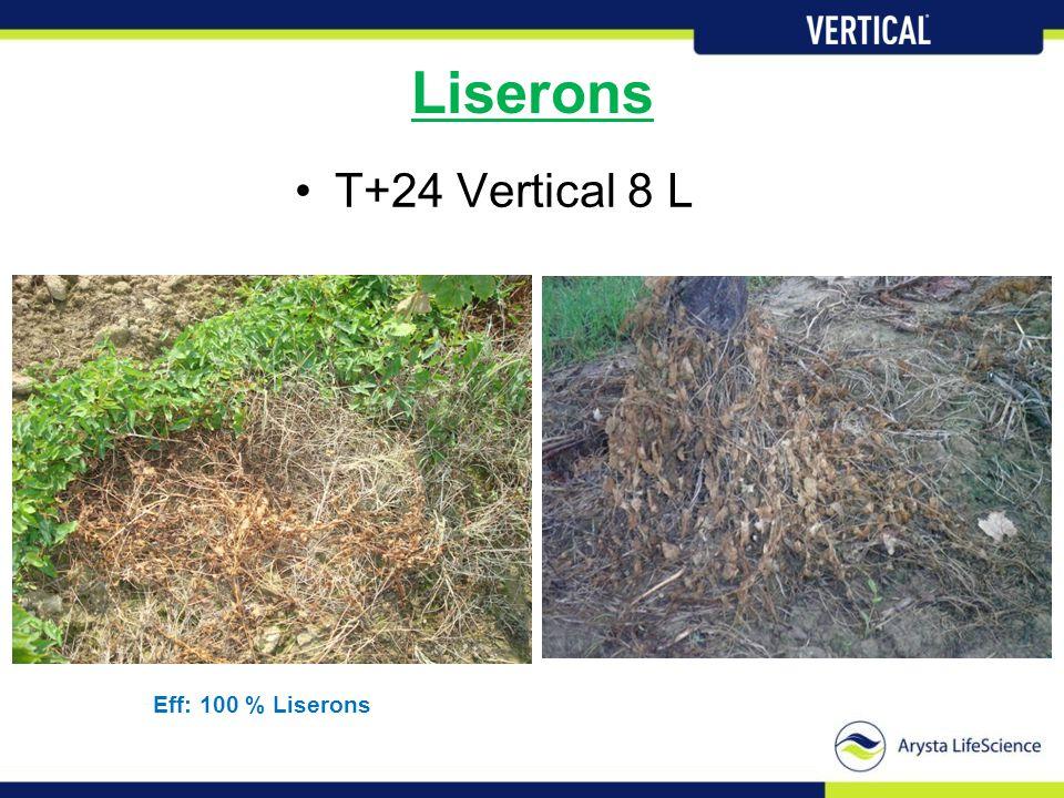 Liserons •T+24 Vertical 8 L Eff: 100 % Liserons